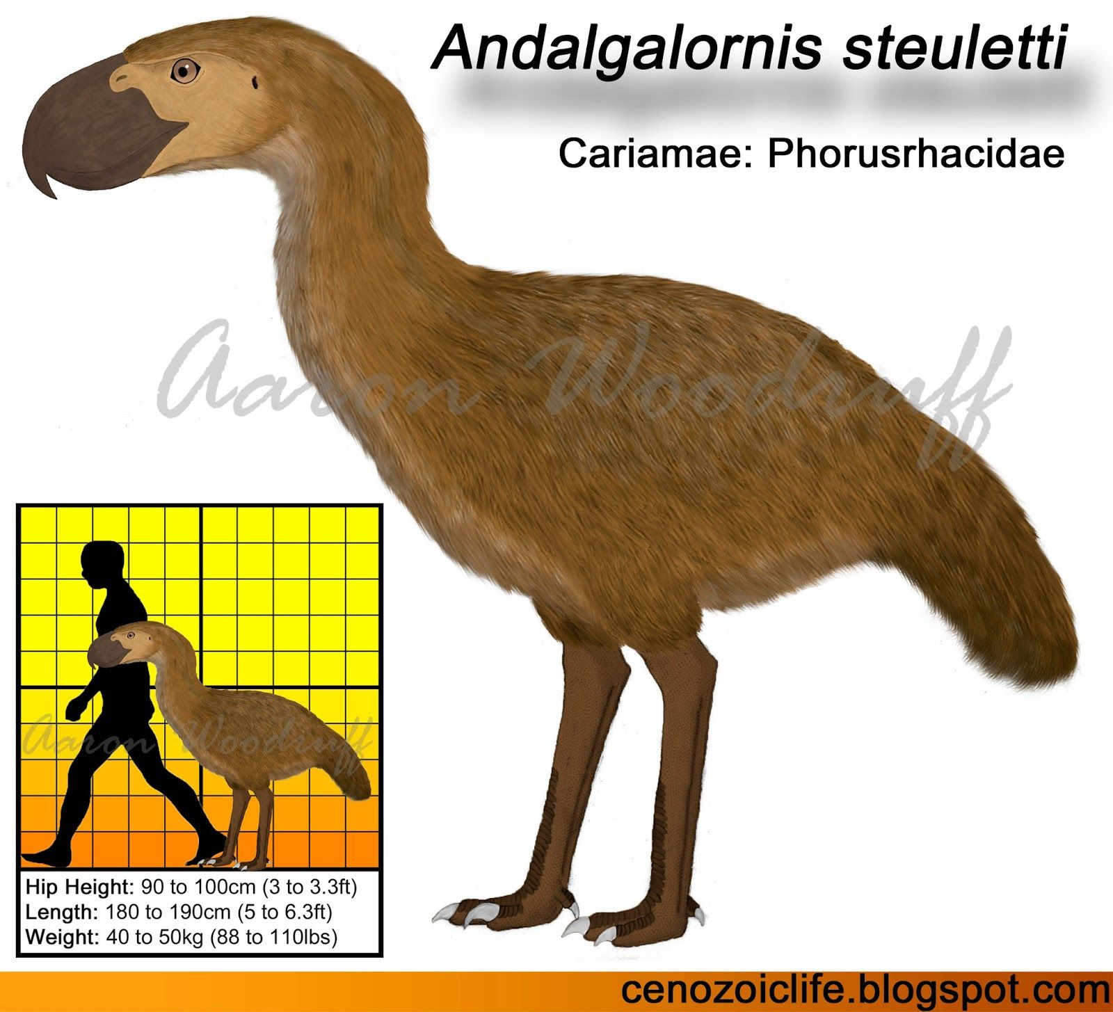 image result for list of all terror bird species | prehistoric