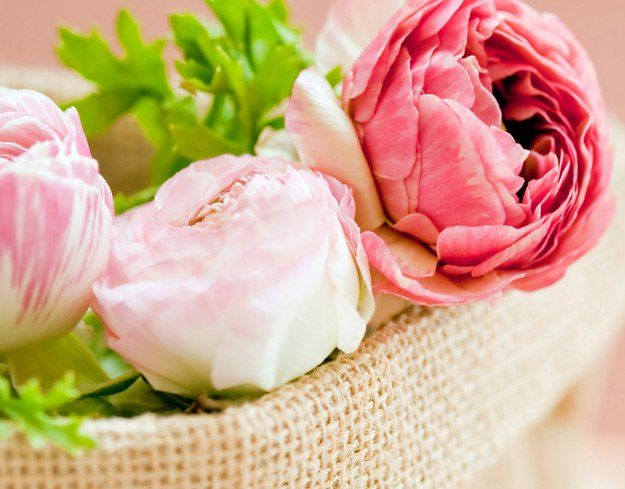 Summer flowers peony flowers and plants summer flowers 35 stunning blooms perfect for the season mightylinksfo