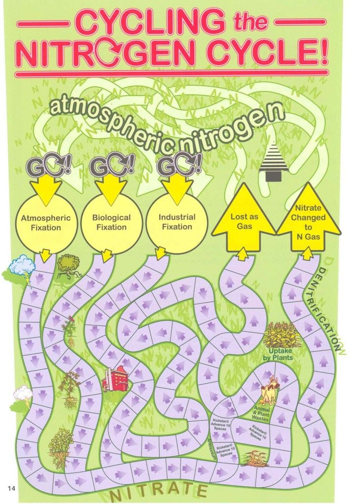 Nitrogen Cycle Game Board Com Imagens 9 Anos