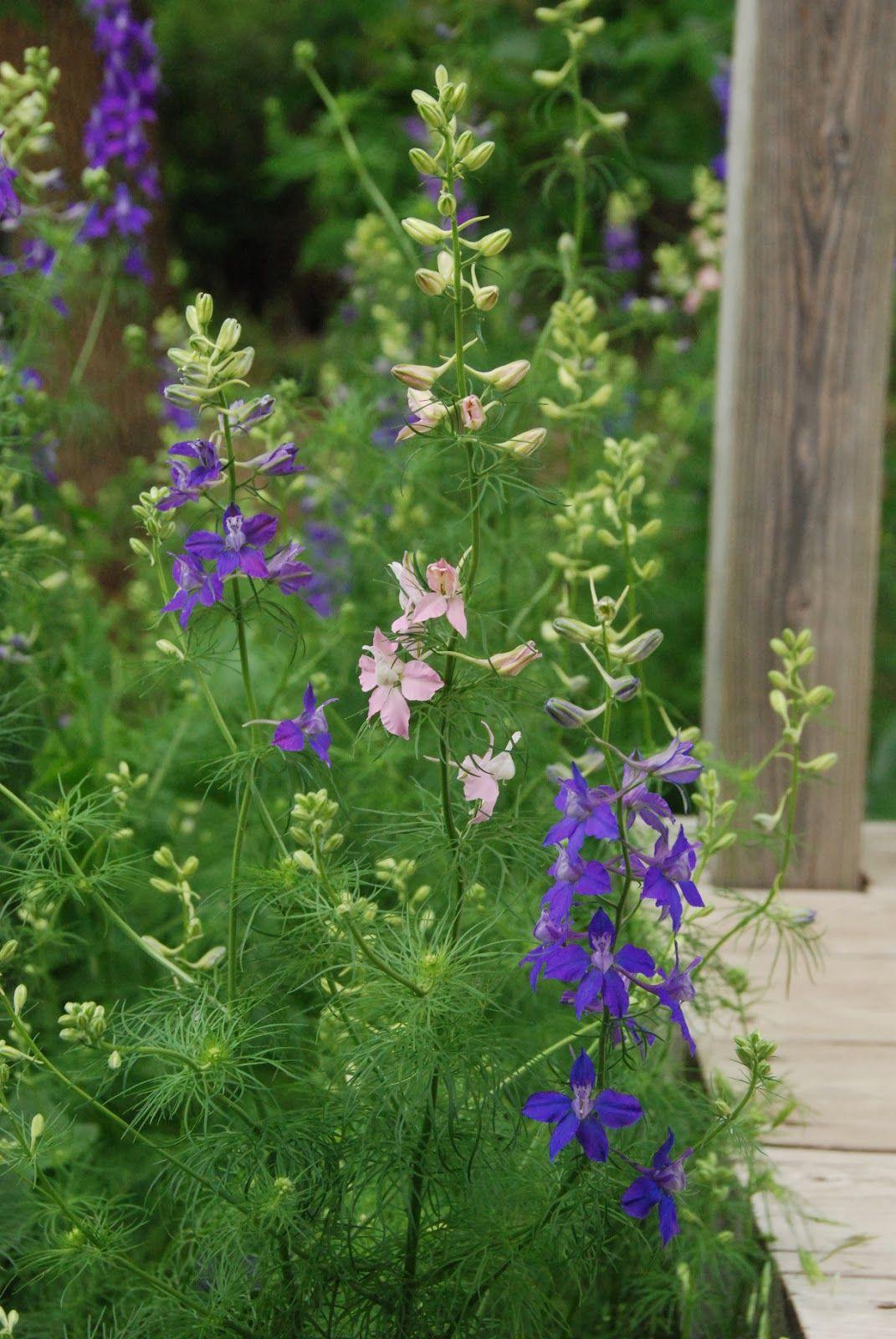 Garden Bed Ideas Flower