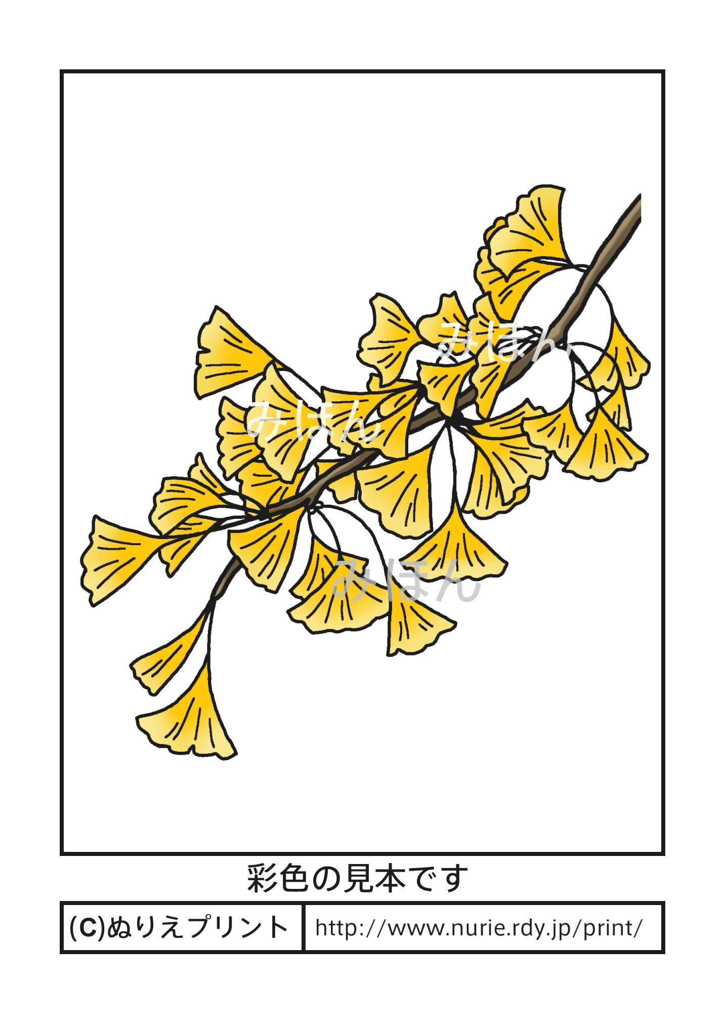 イチョウ 銀杏 彩色見本 東京都の木 無料塗り絵 都道府県 ぬりえ