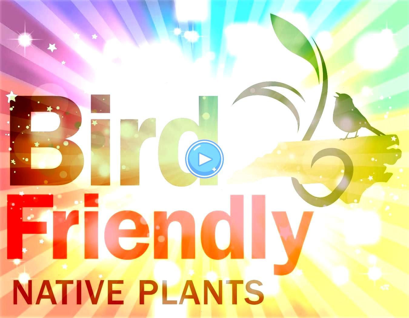 of 400 recommended birdfriendly native plants serve as a guide for everyone interested in choosing plants that help birds thrive alongside peopleThis list of 400 recommen...