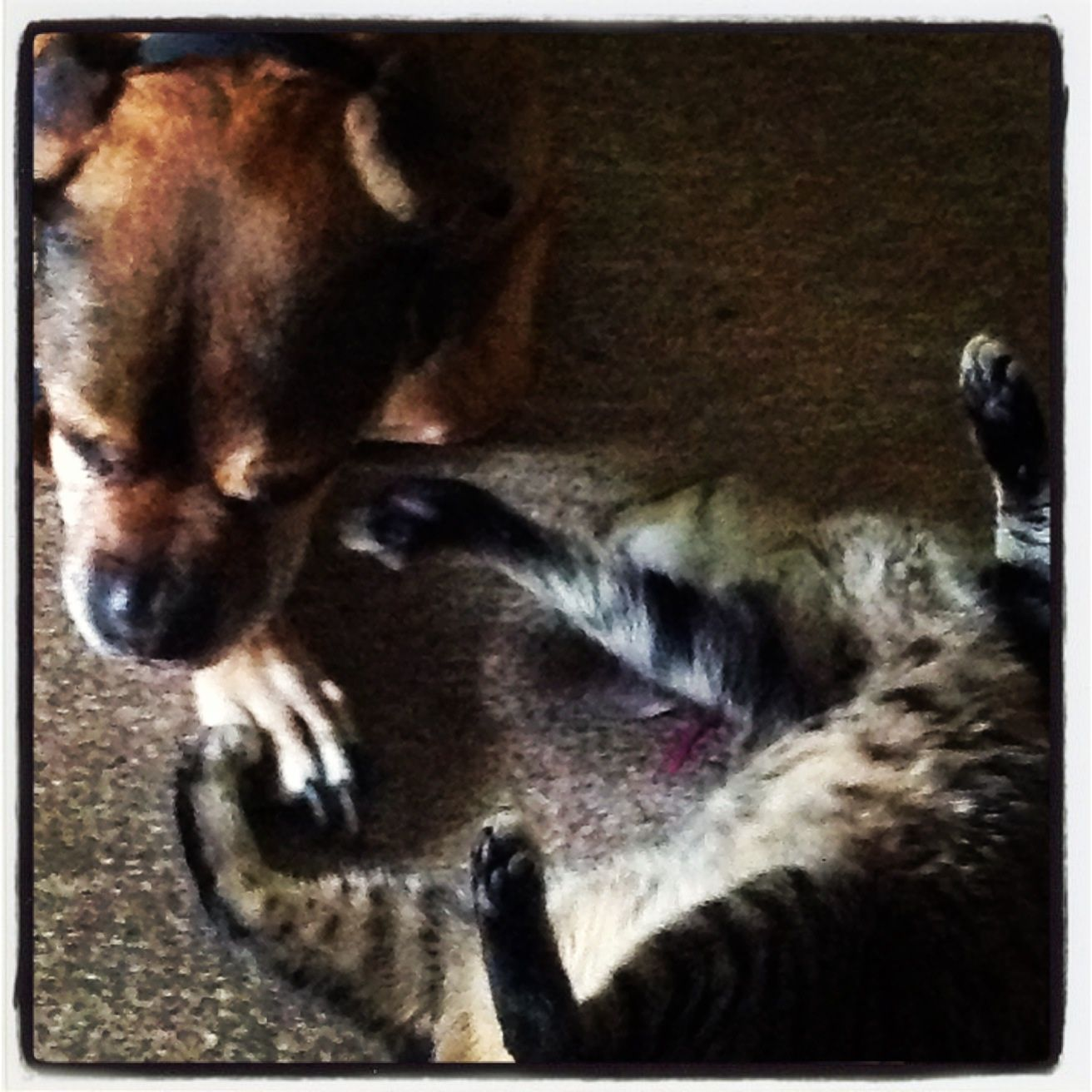 Mac and Nala! Pets, Animals, Cats