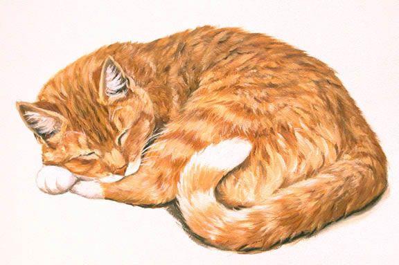 Linda Picken Art Studio Orange Tabby Lying Down Jpg Cats