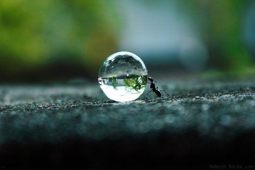 small ant, amazing refraction on water droplet. Great macro photography!