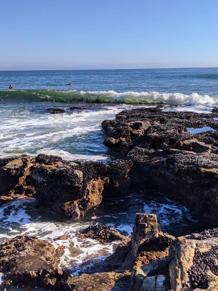 Natural Bridges Tide Pools In Santa Cruz California Tide Pools Santa Cruz California Natural Bridge