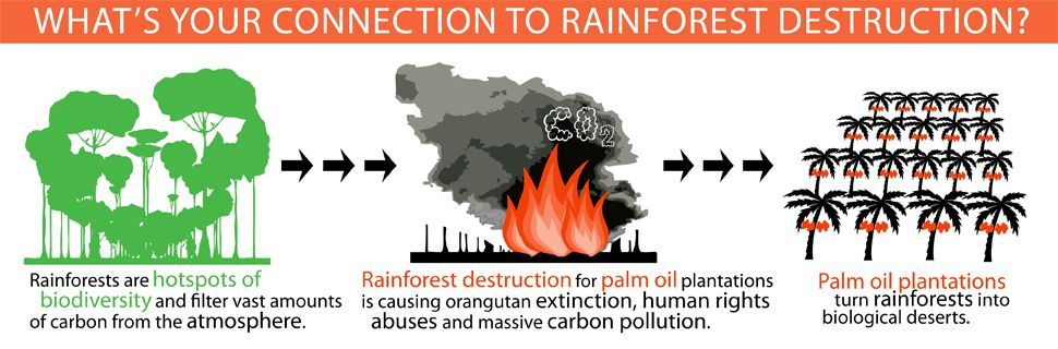 Palm Oil is the reason millions of acres of rainforest have been ...