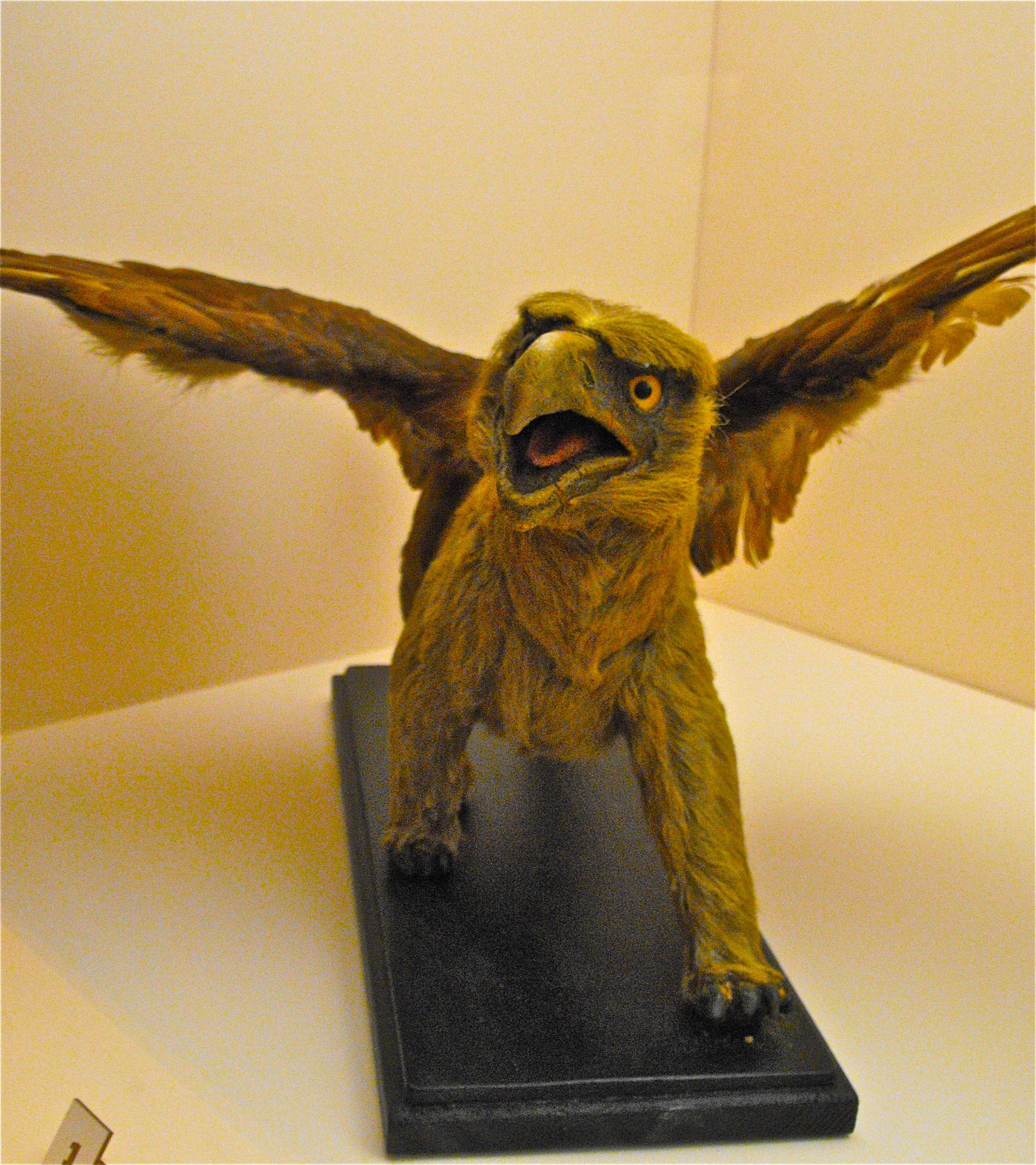 ff99bc7d2be Ray Harryhausen's Gryphon model from THE GOLDEN VOYAGE OF SINBAD ...