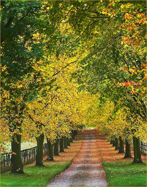 Beech Trees In Autumn Beech Tree Beautiful Tree Paths