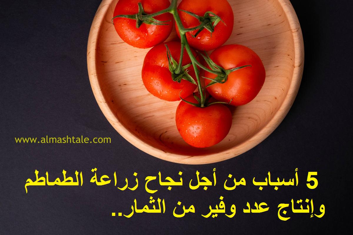 الطماطم واحدة من أكثر الثمار شهرة على وجه الأرض تقريبا أغلب شعوب الأرض تستخدمها كغذاء أو مكون في صنع الطعام والصلصات بشكل أو ب Stuffed Peppers Food Vegetables