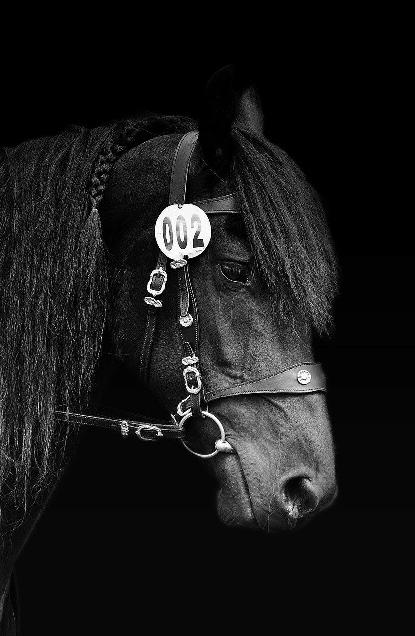 Horse Black White Mobile Wallpapers Horses Horse Wallpaper Hd Wallpaper Android