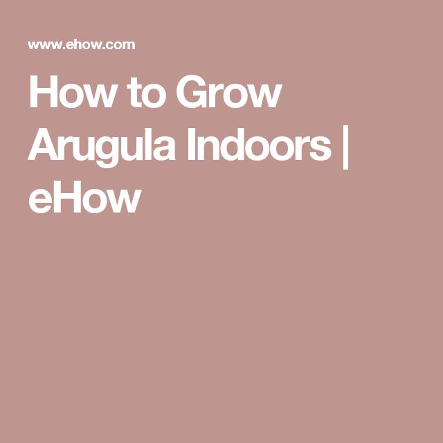 How to Grow Arugula Indoors   eHow