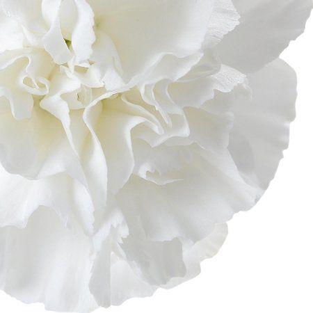 Free Shipping Buy Natural Fresh Flowers White Carnations 100 Stems At Walmart Com White Carnation Carnations Fresh Flowers