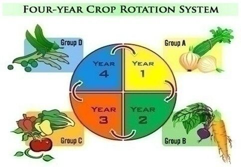 crop rotation diagram - Google Search