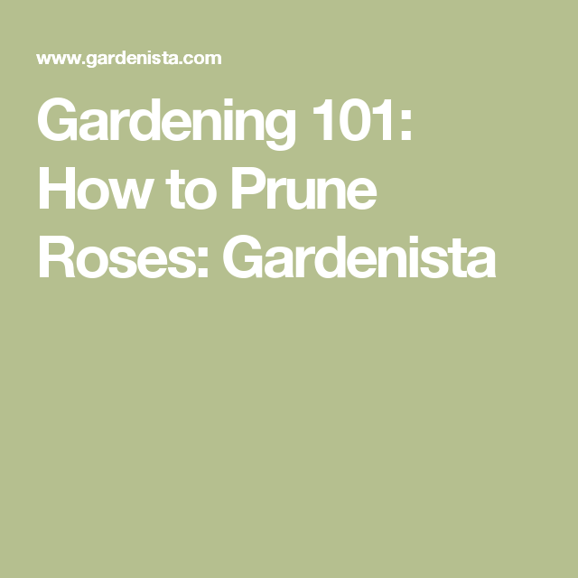 Gardening 101: How to Prune Roses: Gardenista