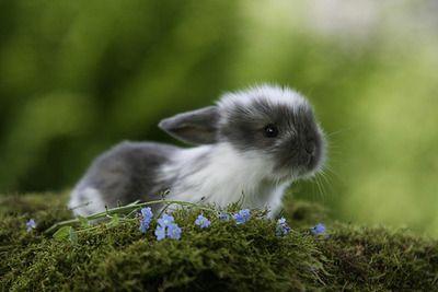 weeeee bunnyyyyyy