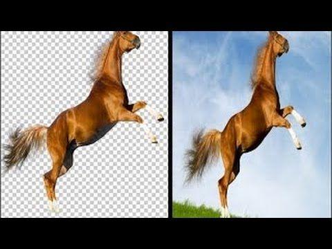 الدرس 1 طريقة قص الصورة بإحتراف دمجها مع خلفية Photoshop Cs6 Youtube Horses Animals Poster