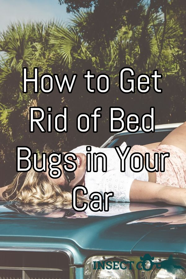 How to Get Rid Of Bed Bugs in Your Car Rid of bed bugs