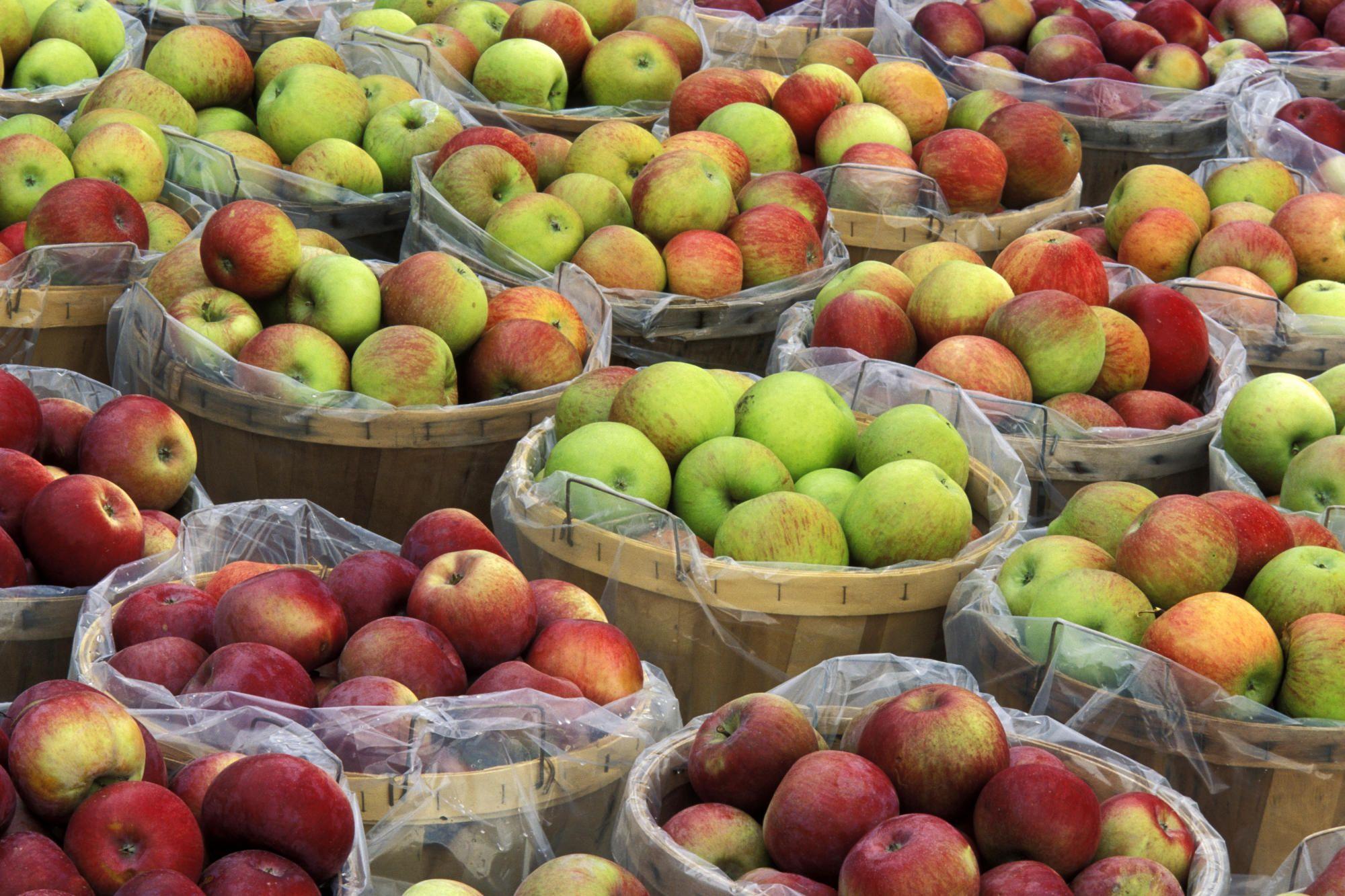 Macintosh apples in bushel baskets for sale, New York.