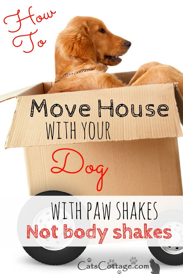 Moving House With Your Dog Best Tips Moving House Dog Shaking