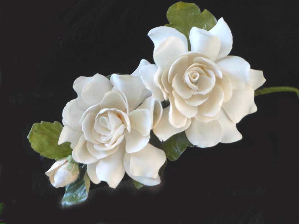 Gardenia corsage s s creamy white flowers with bud