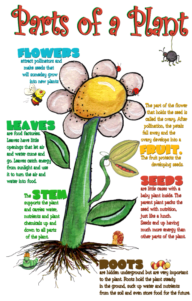 Parts of a plant cell and their functions esl pinterest plant parts of a plant cell and their functions ccuart Choice Image
