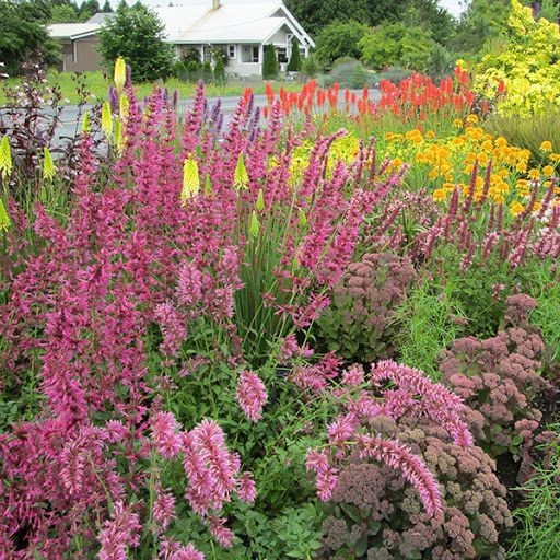 Photo of big bold perennial – Google Search – Flower Beds 2020 Flower Beds 2020