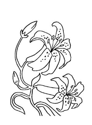 Ausmalbild Orchideen Malvorlagen Blumen Orchideen Ausmalbilder