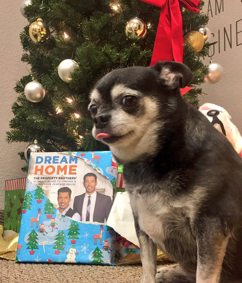 Dreamhome Makes The Perfect Last Minute Gift Gracie Gives Her Stamp Of Approval