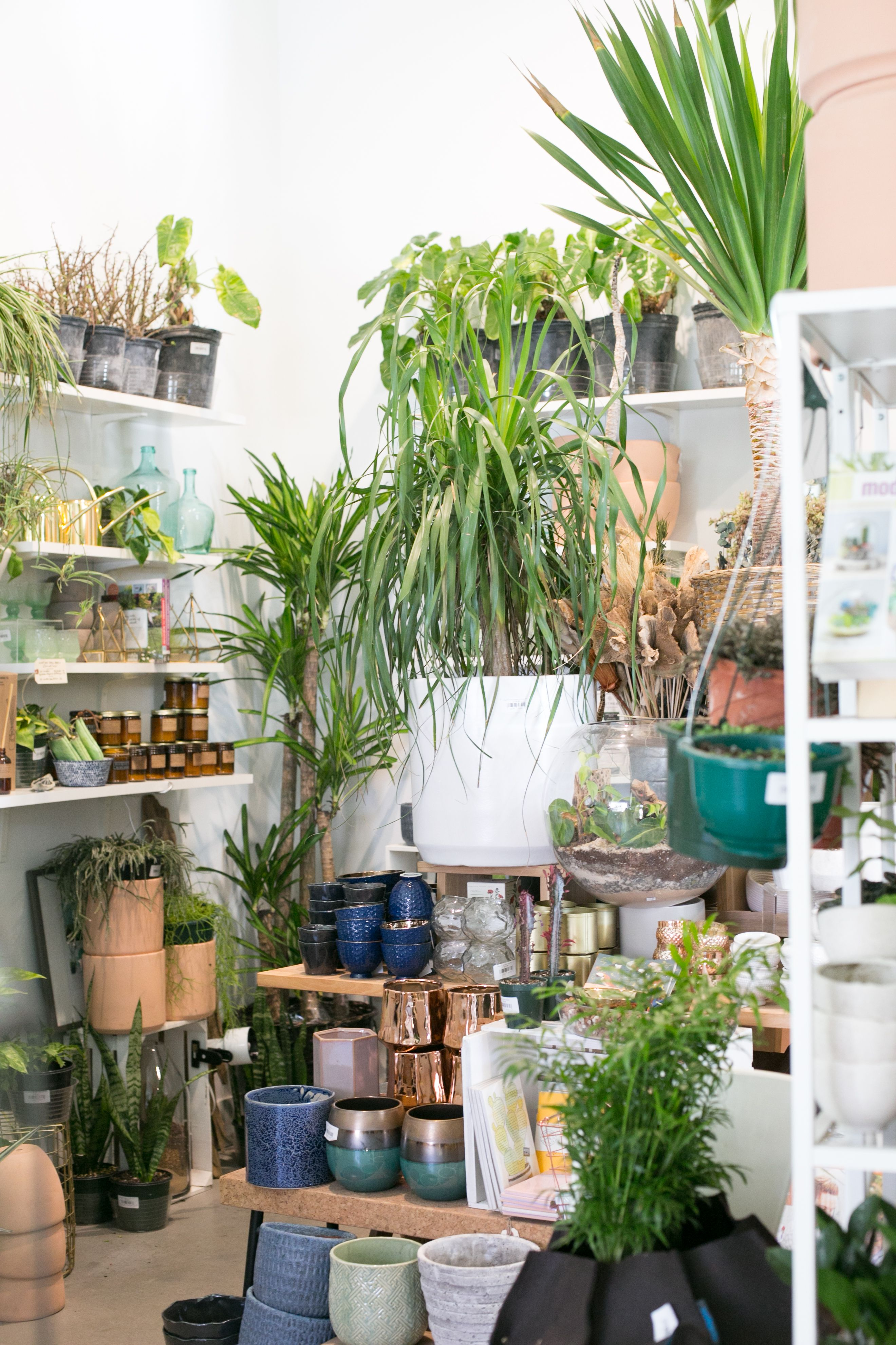 The Zen Succulent - Plant Shop
