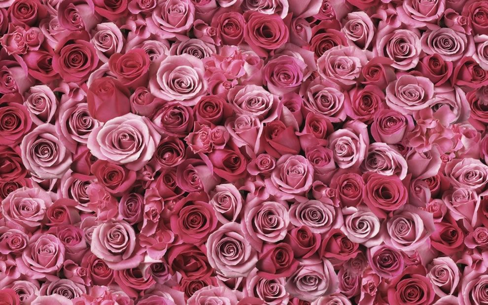 Both the shade of pink as well as the quantity of roses alters the symbolism
