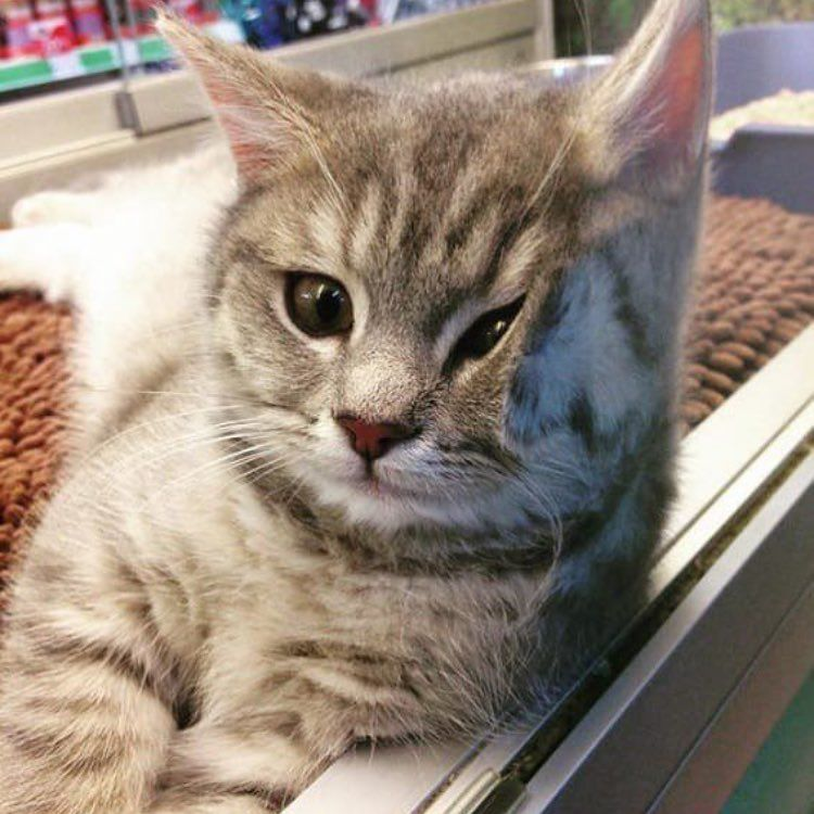 Kittens Cats More Squishy Tag Your Friends Follow Catpixcat Unknown Please Dm Fo Cute Cats Cute Animals Funny Animal Pictures