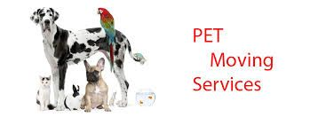 Pet Moving Services In Bangalore Moving Services Moving Pets