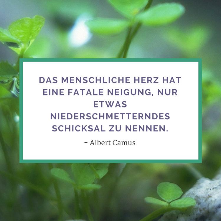 Zitate Leben Albert Camus Schiclsal Lebensbejahende Zitate Inspirierende Spruche Weisheitsspruche