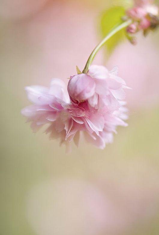 Des fleurs pour adoucir le coeur....