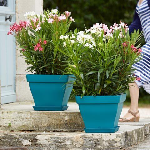 Poetic jardin un jardin en couleur des plantes for Decoration jardin couleur