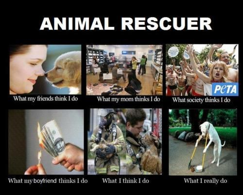 Animal rescue....what ppl think I do...what society thinks I do...what I really do.