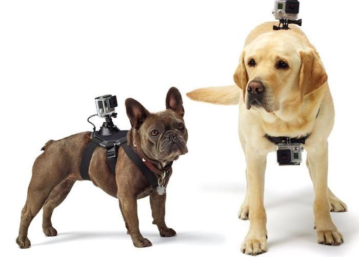 Aqui de Shopping: Pechera Para Perro Para Cámaras Gopro y SJCam - ¡Disponible en Kichink!