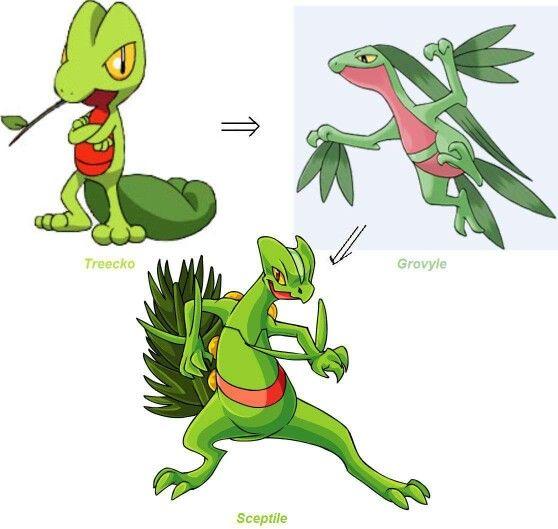 Treecko Evolution | Pokèmon | Pokemon, Original pokemon ...