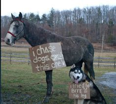 11 Horses That Are Not Sorry for What They've Done - Horse Shaming -…