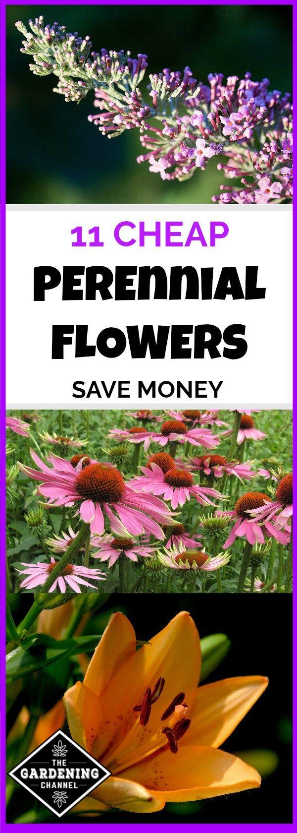 11 cheap perennial flowers for your garden gardening pinterest 11 cheap perennial flowers for your garden gardening pinterest perennials gardens and flower izmirmasajfo