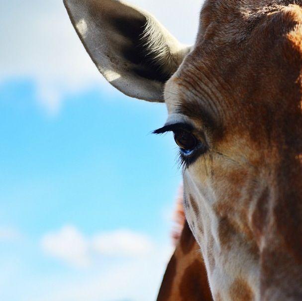 Taronga Zoo - one more time
