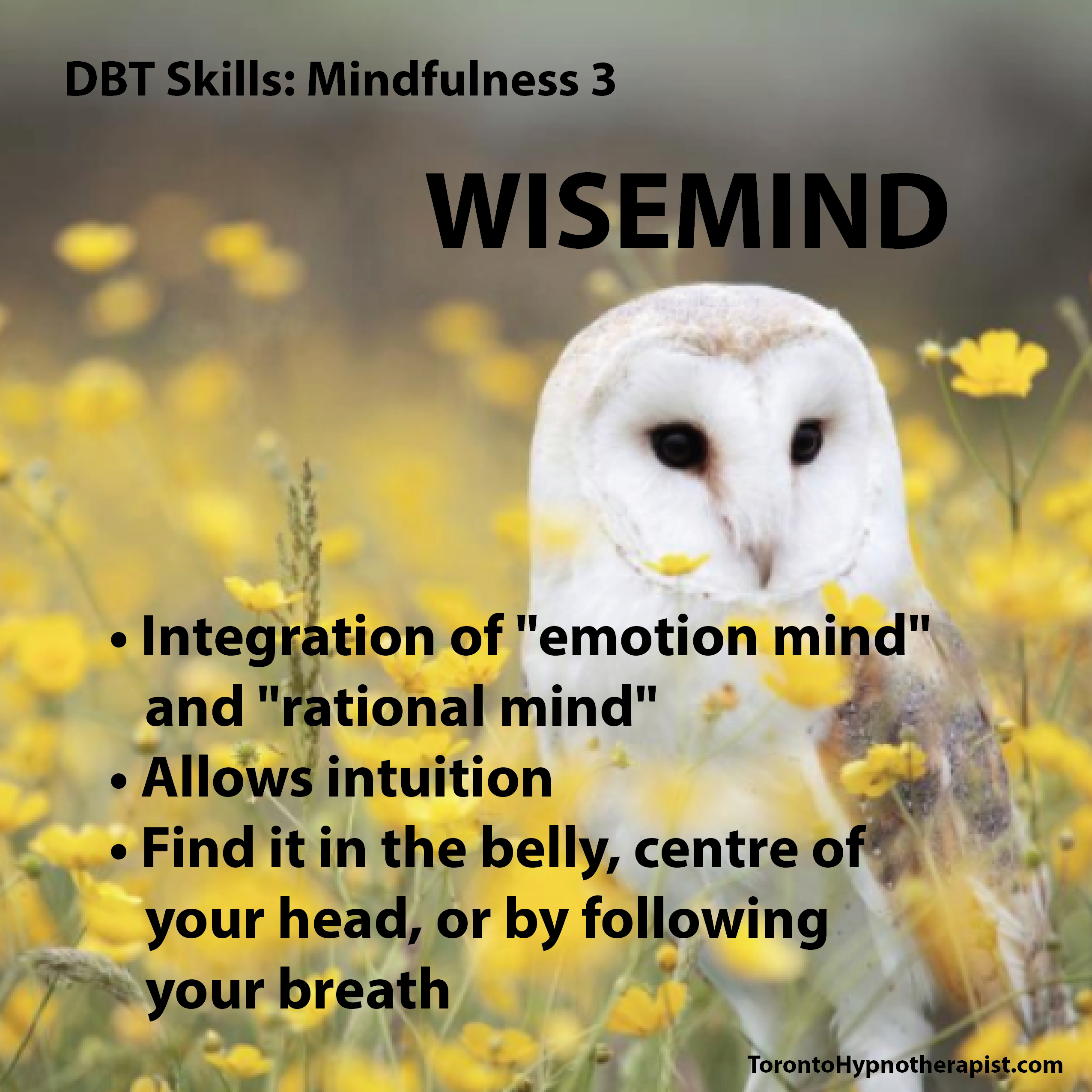 Pin By Through The Minds Eye Photogra On All About Dbt And