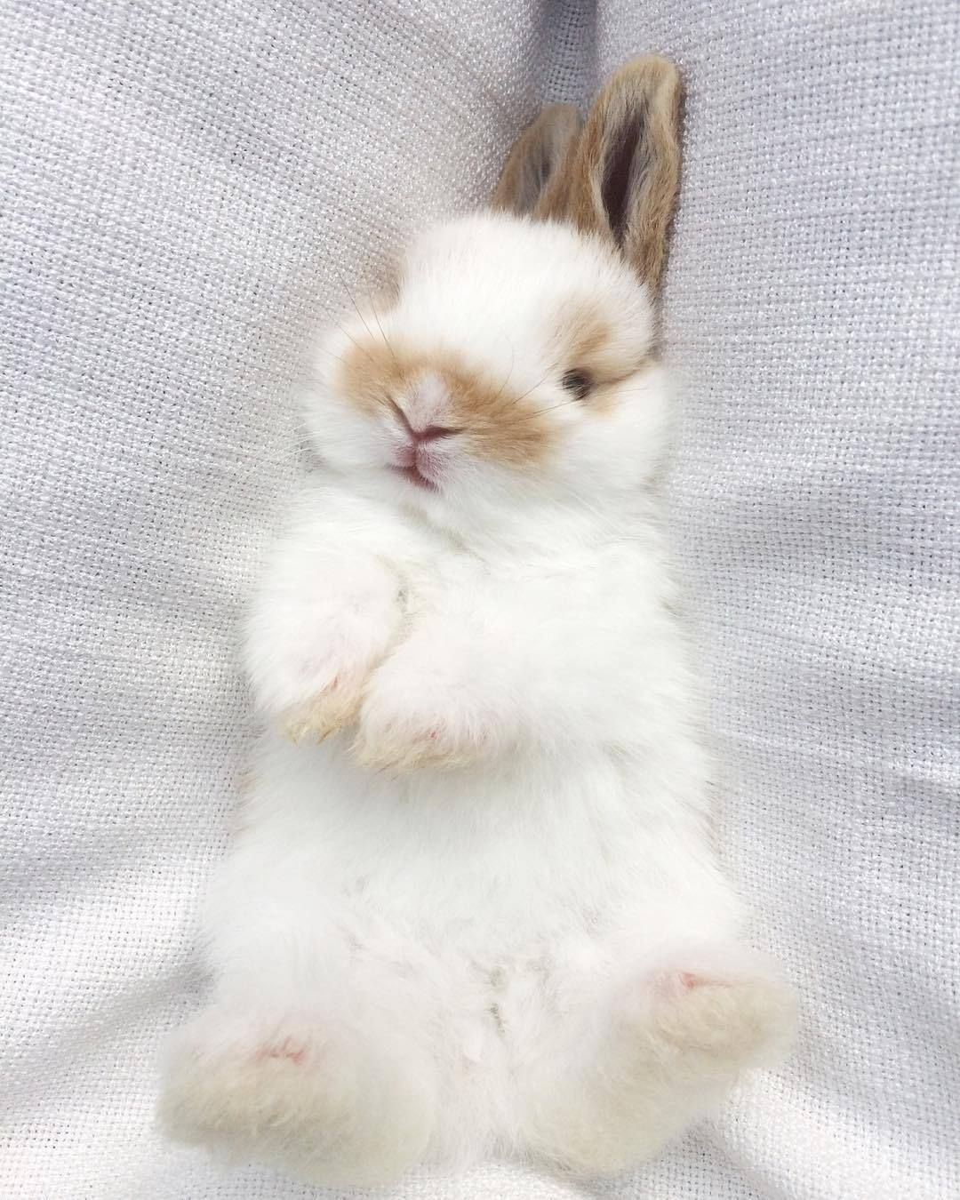 Adorable Bunnies With Images Cute Little Animals