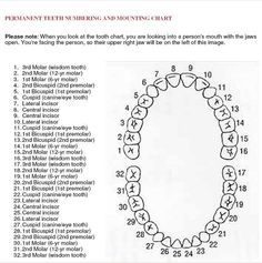 Tooth Chart  Dental Assistants    Tooth Chart