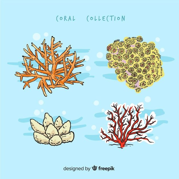 Download Hand Drawn Coral Collection for free | How to ...