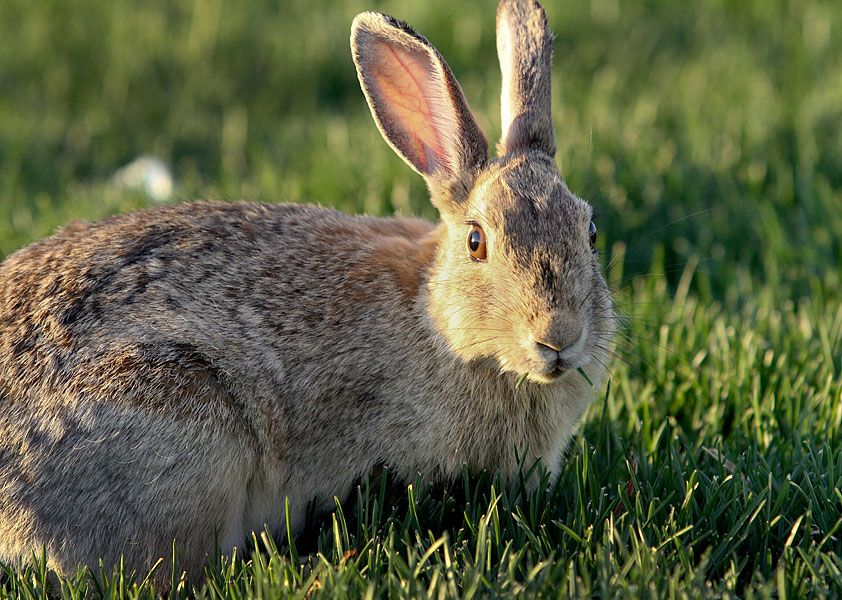 How to get rid of rabbit dead spots in turf. | Dead grass ...