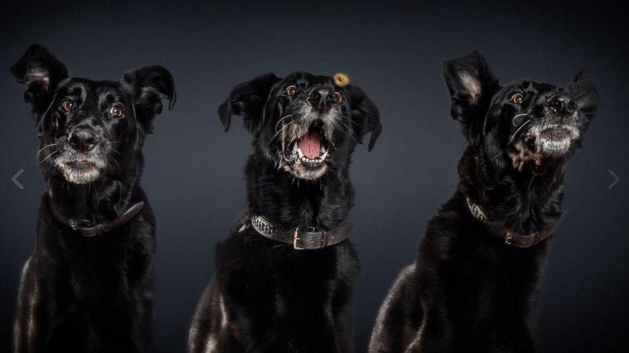 Собачья радость   Фото собак, Милые собаки, Собаки