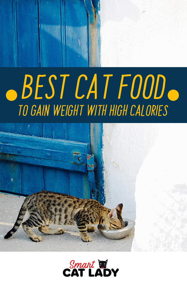 Best Cat Food to Gain Weight with High Calories Cats