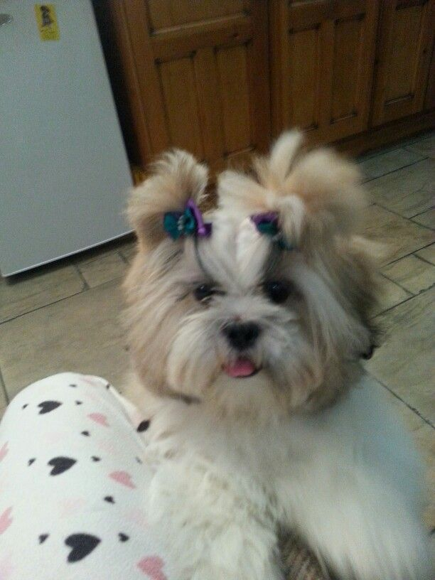 Molly with her new bows